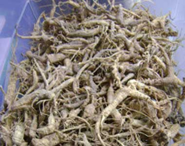 Ginseng In Illinois Map.Ginseng Additional Reading