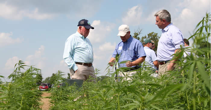 Quarles praises new USDA hemp rule