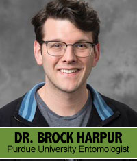 Dr Brock Harpur Purdue University Entomologist